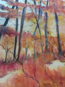 Sous bois d automne