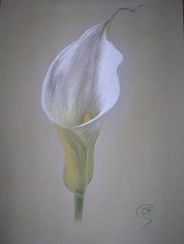 Fleur au pastel - Arum