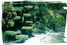 Escalier d'arbre