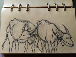 Les bœufs cambodgiens