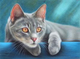 Mikky, le chat tigré à l'affût