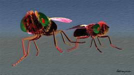 insectes la guerre