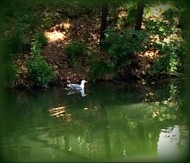 La mouette du canal.