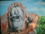 les orang outans