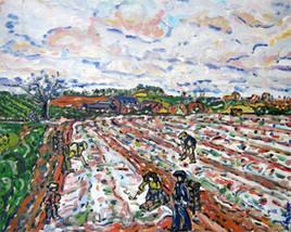 champs de camargue