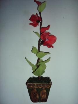Orchidé flame
