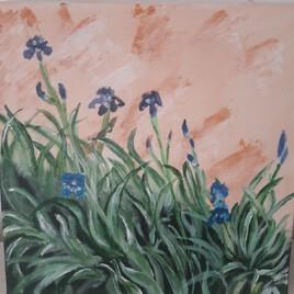 Iris du vallon des Glauges