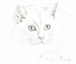 Portrait Chat Crayon