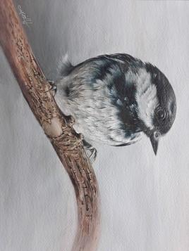 پرنده در سرما