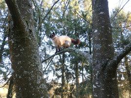 Mizou d'une branche à l'autre