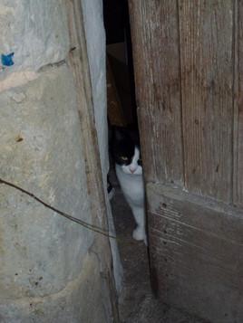 chat au guet