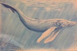 La dernière baleine bleue