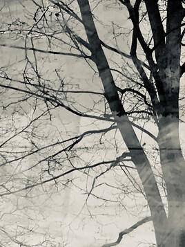 L'arbre devant ma fenêtre