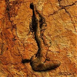 ''F.  Fossile 2 ''