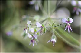 Floral inspiration - IMG 0397