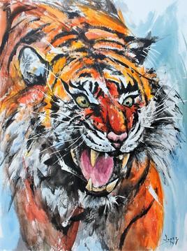 529 Faim de tigre