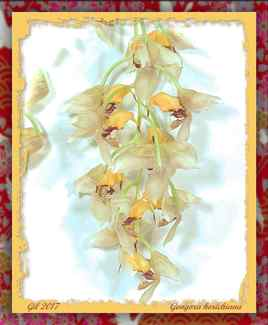 Gongora horichiana - Orchidée