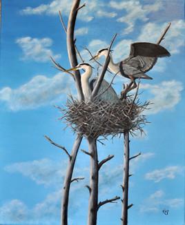 Le nids des grand hérons bleus