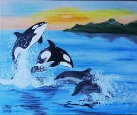 orques et dauphins