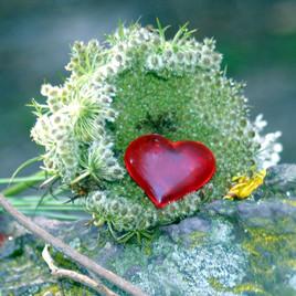 Le coeur du druide