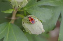 Géométrie d'insecte