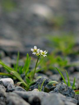 Petite fleur blanche 3