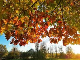 les feuilles d'automne..