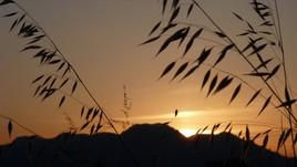 coucher de soleil champêtre