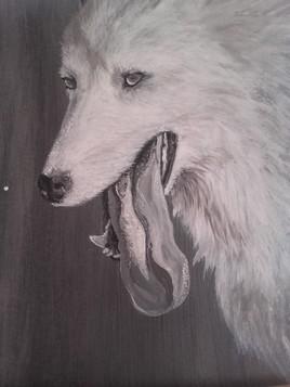 Hikari, la chienne berger blanc suisse (offert)