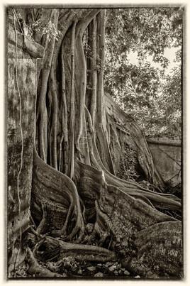 la prison emprisonnée 9 (Petit Canal - Guadeloupe) tirage dibond® 40 x 60 cm