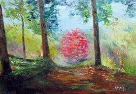 Séquoias à Boutiguery