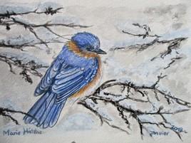 Oiseau d'hiver