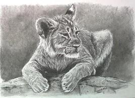 Léo le lionceau