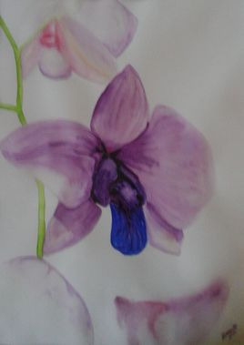 orchidee violette