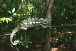 Réserve de Lokobe-Madagascar