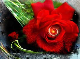 Autre Rose rouge