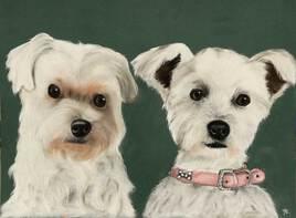 petits chiens blancs