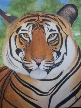 tigre des indes