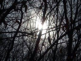 Lumière dans les bois