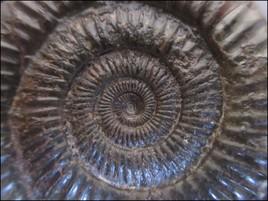 Spirale Préhistorique