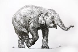 Dessin d'Elephanteau