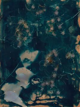 Lumen #91 - clématite des haies