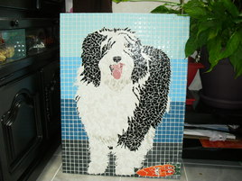 Portrait d'un chien (Bearded collie)
