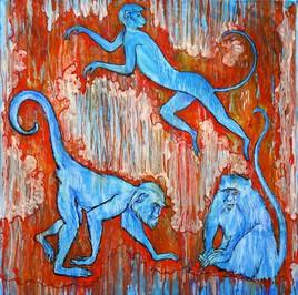 Akrotiri blue monkeys