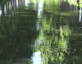 L'eau verte du canal du midi.......à Toulouse