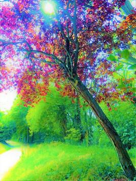 automne ou printemps ? :)
