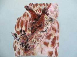 Câlin de girafes
