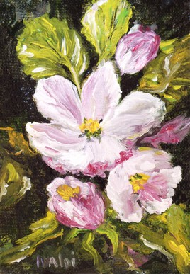 Fleurs d'églandine