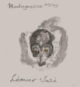 Lémur Vari