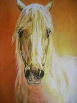 portrait d'un cheval camargue